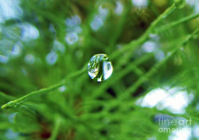 Photograph - Dewdrop Reflection by D Hackett