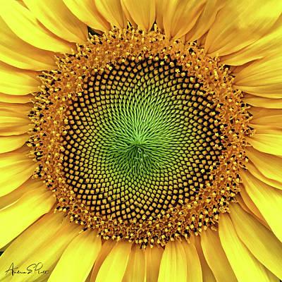 Photograph - Dewdrops On The Sun by Andrea Platt
