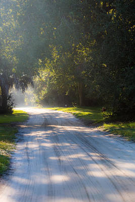 Photograph - Dewees Island Cart Path by Donnie Whitaker