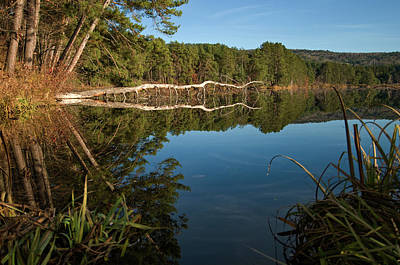 Photograph - Dewey's Pond by Paul Mangold
