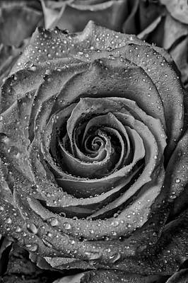 Photograph - Dewy Black And White Rose by Garry Gay