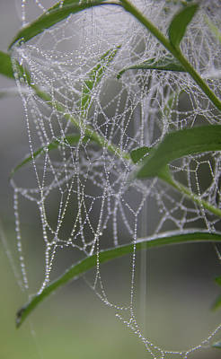 Photograph - Dewy Diamonds by Teresa Mucha
