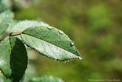 Photograph - Dewy Leaves by Teresa Blanton