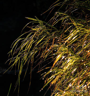 Photograph - Dewy River Grass by Mim White