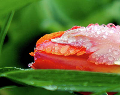 Photograph - Dewy Slumber by Wild Thing