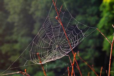 Photograph - Dewy Spider Web by Kathryn Meyer