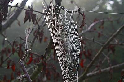 Photograph - Dewy Webs 1 by Kathryn Meyer