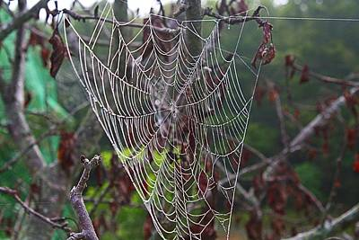 Photograph - Dewy Webs 2 by Kathryn Meyer