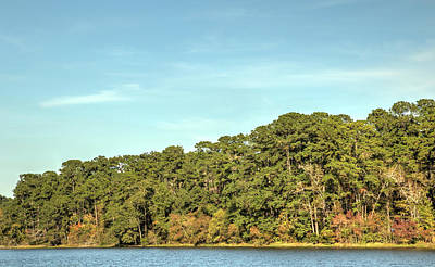 Photograph - Diagonal Trees by Bonnie Davidson
