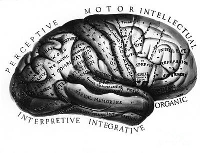 Photograph - Diagram Of Brain Functions by Omikron