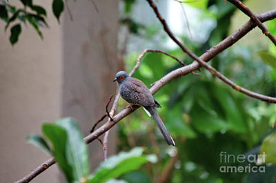 Photograph - Diamond Dove by Michelle Meenawong