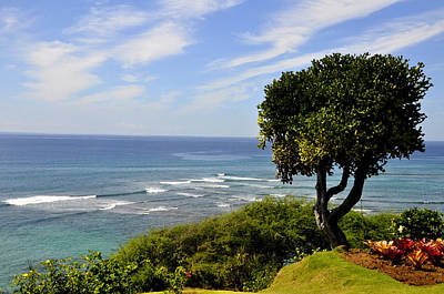 Photograph - Diamond Head Tree by Andrew Dinh