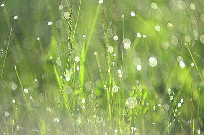 Photograph - Diamond Sparkles. Green World by Jenny Rainbow