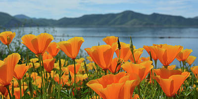 Photograph - Diamond Valley Lake Poppy Panorama by Kyle Hanson