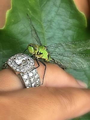 Photograph - Diamonds Are A Dragonflies Best Friend by Lorella Schoales