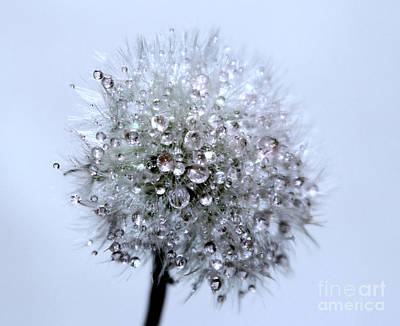White Flower Photograph - Diamonds Of Nature by Krissy Katsimbras