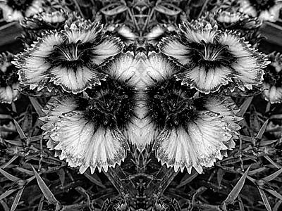 Photograph - Dianthus Black And White Butterfly by Dorothy Berry-Lound