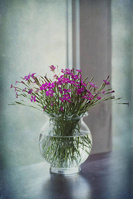 Dianthus Art Print by Maggie Terlecki