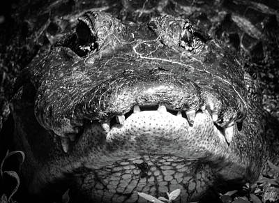 Photograph - Diary Of A Gator, No. 1 by Elie Wolf