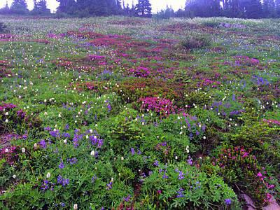 Dickerman Floral Meadow Art Print