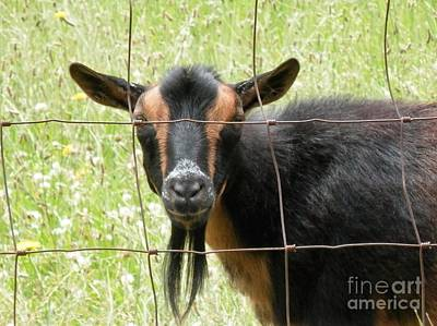 Photograph - Did Someone Say Goat T by L Cecka
