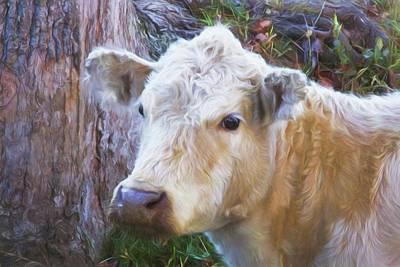 Digital Art - Did Someone Say Milk? by Sharon Batdorf