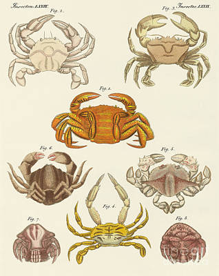 Different Kinds Of Crabs Art Print
