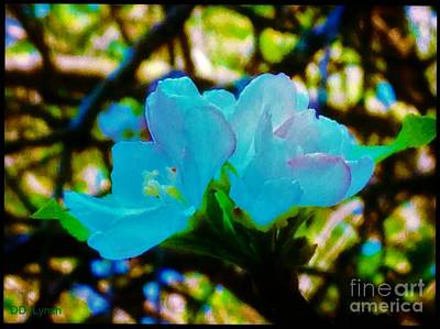 Different Look Of Apple Blossoms Art Print by Debra Lynch