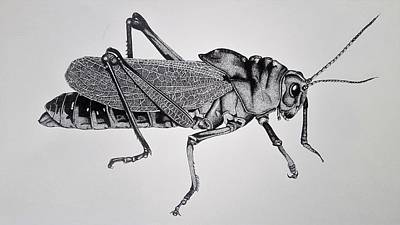 Grasshopper Drawing - Differential Grasshopper by Julie Persico