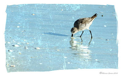 Sandpiper Photograph - Dig In by Marvin Spates