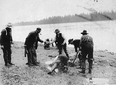 Photograph - Digging For Geoducks by Unknown
