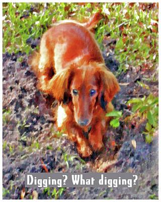 Dachshund Digital Art - Digging? What Digging? Poster by Claudia O'Brien