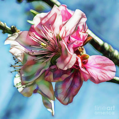 Jeffery Johnson Photograph - Digital Artistic Print Of Cherry Blossoms by Photo Captures by Jeffery