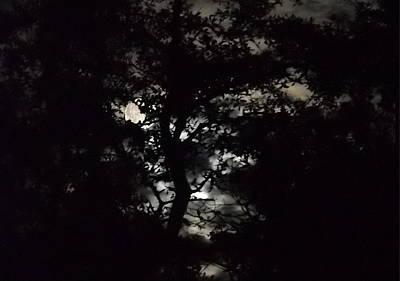 Painting - Digital Fine Art Work Full Moon Trees Gulf Coast Florida by G Linsenmayer