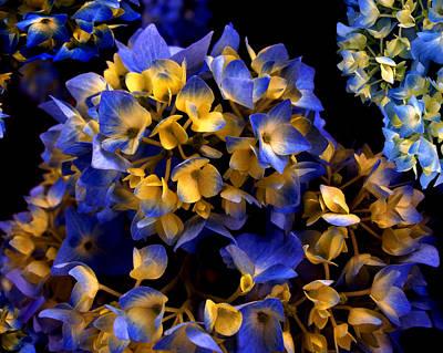 Photograph - Digital Hydrangea by Lynda Lehmann