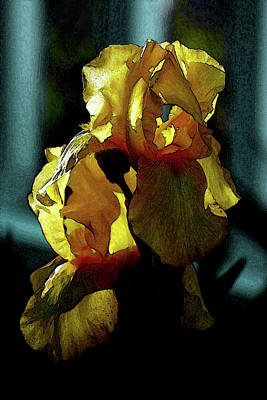 Photograph - Digital Painting Gold Dust Iris 6741 Dp_2 by Steven Ward