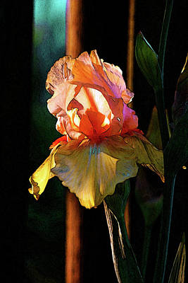 Photograph - Digital Painting Iris Catching The Sun 6768 Dp_2 by Steven Ward