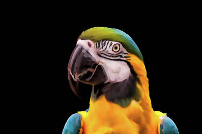 Mimic Digital Art - Digital Painting Of A Blue And Yellow Macaw Parrot by Tim Abeln