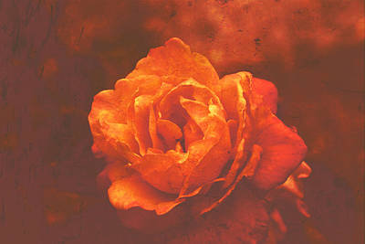Digital Art - Fiery Colored Rose by Fine Art By Andrew David