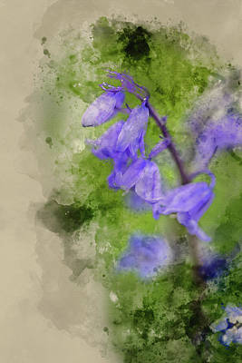 Photograph - Digital Watercolor Painting Of Stunning Hyacinthoides Hispanica  by Matthew Gibson