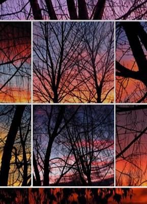 Photograph - Digital Winter Trees by Chris Dunn