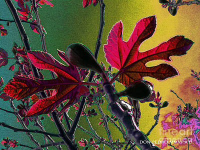 Figtree Digital Art - Fig Tree Leaves 2 by Don Pedro De Gracia