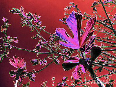 Figtree Digital Art - Figtree Leaves 3 by Don Pedro De Gracia