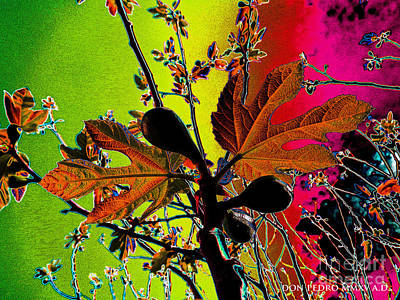 Figtree Digital Art - Figtree Leaves 4 by Don Pedro De Gracia