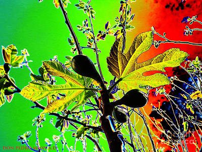 Figtree Digital Art - Fig Tree Leaves by Don Pedro De Gracia