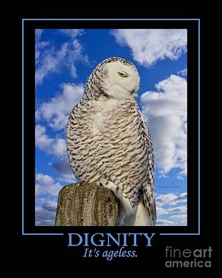 Photograph - Dignity by Heather King