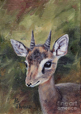 Painting - Dikdik - Dwarf Antelope by Brenda Thour