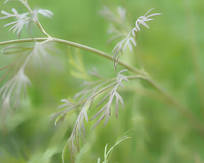 Blend Photograph - Dill-icious  by Connie Handscomb