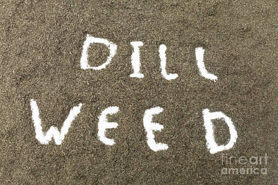 Photograph - Dill Weed by Diane Macdonald