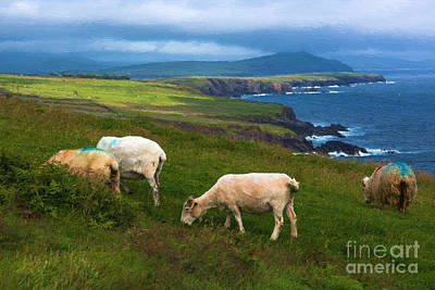 Photograph - Dingle Ireland by Andrew Michael